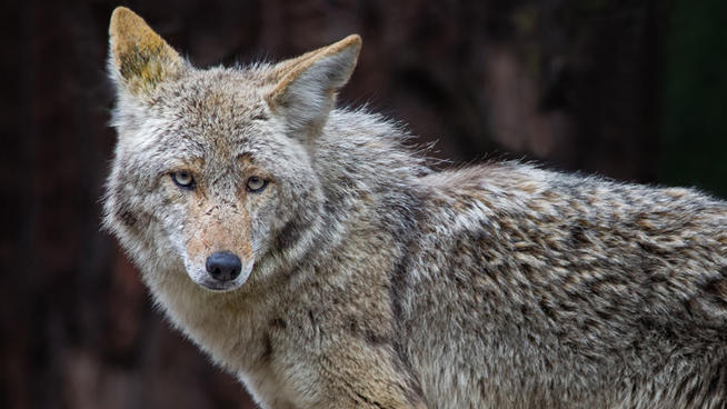 Wiley Coyote moves to the suburbs   U Penn Social Book