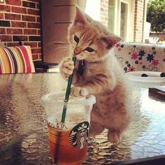 starbucks kitty