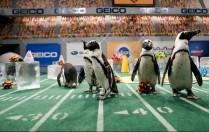 Penguin Cheerleaders, Courtesy of Animal Planet