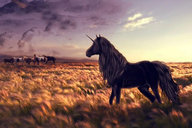 Black-Unicorn-HD-Desktop-Wallpaper